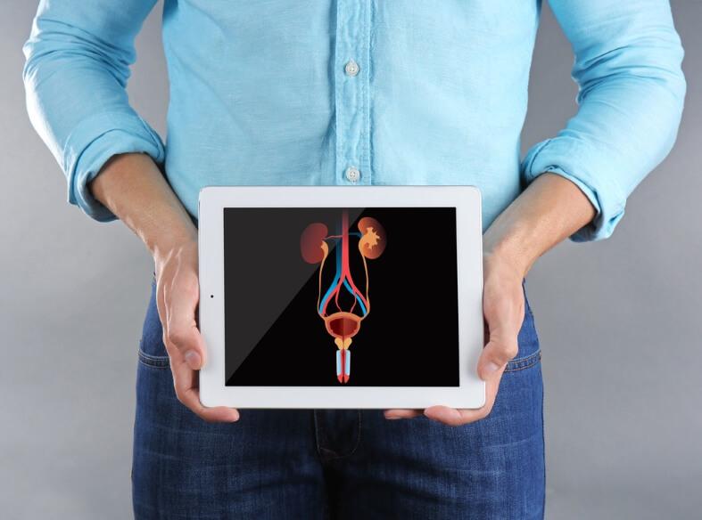Prostata – funkcija i anatomija
